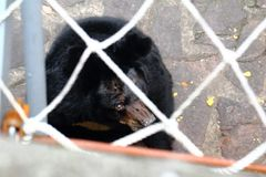 A bear in a net hole Royalty Free Stock Images