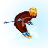 Bear Olympic champion Royalty Free Stock Photo