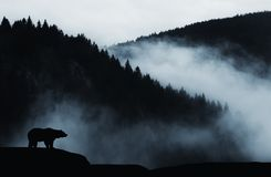 Free Bear On Cliff In The Mountain With Mist Stock Image - 133343891
