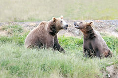 Bear Pals Royalty Free Stock Image
