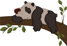 The bear a panda. Cartoon Stock Images