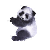 Bear the panda. Isolated on white background. Watercolor illustration Stock Photography