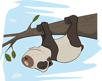 The bear panda sleeps on a tree. Cartoon Royalty Free Stock Image