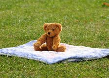 Bear in the park Stock Images