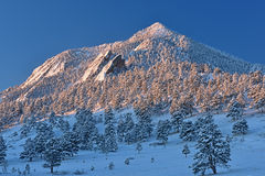 Bear Peak Snow Flocked Stock Image