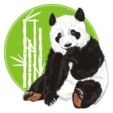 Bear peek up from green banner with bamboo. Cute panda stick out fromcircle green icon with white bamboo Stock Photos