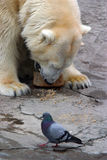 Bear and pigeon Stock Photo