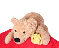 Bear on pillow. Bear on red pillow on white background Royalty Free Stock Photo