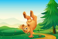 A bear playing with the stumps Stock Photo