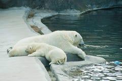 Bear and polar bear near the water. Teddy bear and polar bear near the water Stock Images