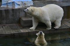 Bear Stock Photography