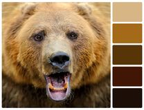 Bear portrait with palette color swatches Stock Photo