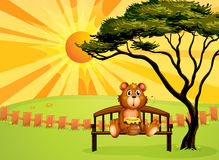 A bear with a pot of honey sitting at the bench Stock Images