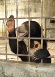 Bear in prison Royalty Free Stock Photography