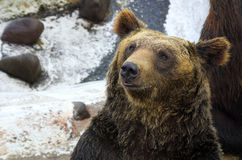 Bear. Protection carnivore  climate, nature Stock Images