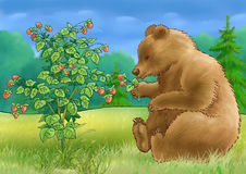Bear and a raspberry. The bear sits at a bush of a raspberry Stock Images