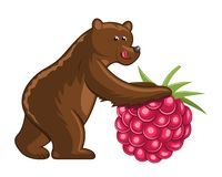 Bear with raspberry Royalty Free Stock Photos