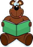 Bear Reading Stock Photos