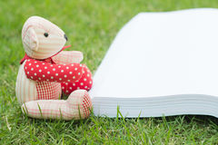 bear reading the book Stock Image