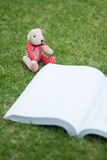 Bear reading the book Royalty Free Stock Photos