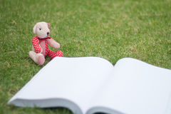 Bear reading the book Royalty Free Stock Photo