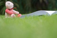 Bear reading the book Stock Photography