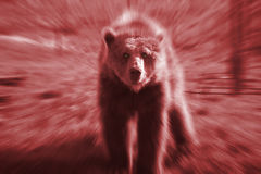Bear with red motion blur Stock Photo