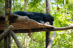 Bear rescue centre in Laos Royalty Free Stock Images