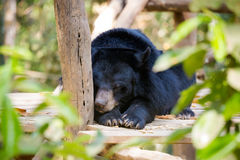 Bear rescue centre in Laos Stock Images