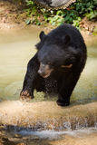 Bear rescue centre in Laos Royalty Free Stock Photo