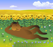 Bear resting on the clearing. Vector cartoon illustration with bear on the grass, field of sunflowers and blue sky with clouds. Stock Photos