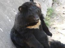 Bear resting and enjoying stock photo