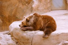 Bear resting on stone in zoo stock image