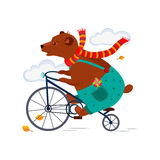 Bear Riding a Bicycle in  Scarf Autumn. Vector Stock Photo