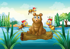 A bear riding on a trunk floating in the river Royalty Free Stock Image