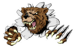 Bear ripping through background. A scary Bear ripping through the background with sharp claws Royalty Free Stock Photo