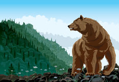 The bear rises on a grief Stock Image