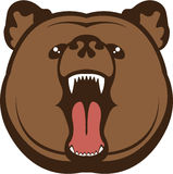 Bear Roar Royalty Free Stock Photo