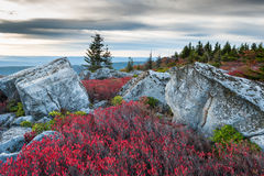 Bear Rocks Preserve Dolly Sods Wilderness Area West Virginia Stock Photography