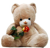 Bear with  rose Royalty Free Stock Photography