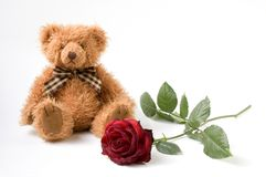 Bear and Rose. Teddy Bear and red Rose Stock Image