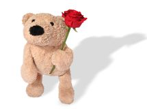 Bear with rose. Isolated on white background stock photography