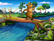 A bear running while crossing the river Stock Images