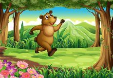 A bear running at the forest Stock Photography