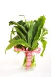 Bear's garlic Stock Photography