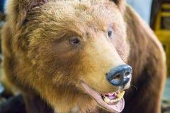 Bear`s head with bared teeth. Scarecrow Stock Photography