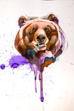 Bear`s head drawn in pencil,brush and watercolor Royalty Free Stock Photo