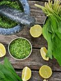 Bear's onion pesto. Stock Images