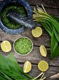 Bear's onion pesto. Royalty Free Stock Images