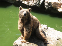 Bear. Sad bear in the zoo Stock Photography